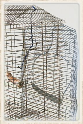 084 caged