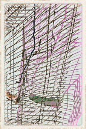 087 caged4